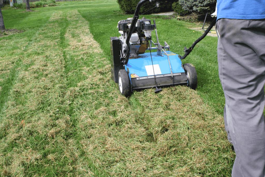 power rake dethatching lawn